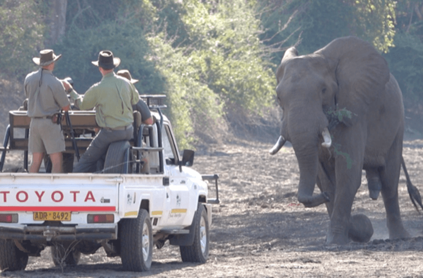 patrol car and elephant