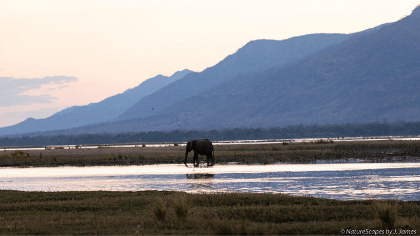 elephant in water pond