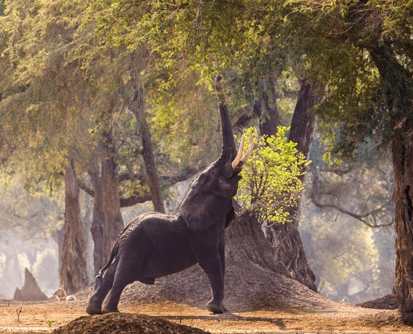 elephant eating under tree